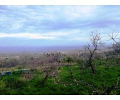 Rustici e caseggiati con 13500 mq di giardino