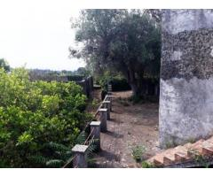 Palazzo primi '900 con palmento e cantina e giardino di 7000 mq