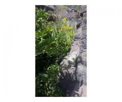 Rustico in pietra con giardino a Nunziata di Mascali alta