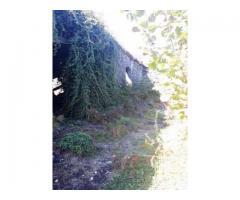 Rustico in pietra con 70 mila mq di noccioleto sull'Etna