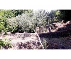 Rustico panoramico con 6000 mq di giardino